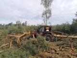 Z regionu: tragiczny wypadek. Drzewo przygniotło mężczyznę. Poszkodowany zmarł w szpitalu