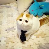 Dziś dzień kota! Zobaczcie ulubione koty internautów na całym świecie! [ZDJĘCIA]