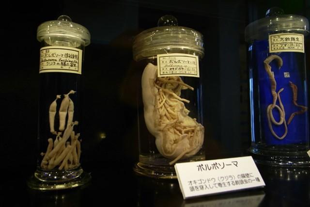 To jedyne na świecie muzeum, w którym można zobaczyć kolekcje zwierzęcych i ludzkich pasożytów.   Tasiemce, larwy, glisty ludzkie (w sumie ok. 300 rodzajów pasożytów) zostały zanurzone w formalinie i umieszczone w słoikach. Największą atrakcją tej wystawy jest 9-metrowy tasiemiec.  Strona muzeum: www.parasitemuseum.com