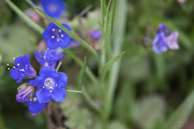 Życzenia imieninowe i bukiet kwiatów to bardzo dobry upominek dla solenizantki. Sprawdź, jakie życzenia na imieniny możesz wybrać.