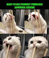 Kot, koteł, kitku! Potrafią nas naprawdę rozbawić. Zobacz memy z kotami w roli głównej!  [GALERIA]
