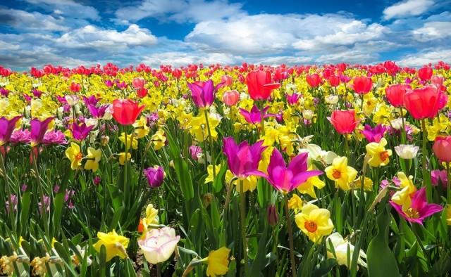 QUIZ. Czy rozpoznajesz pierwsze wiosenne kwiaty?