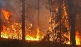 Płoną lasy wokół Czarnobyla. Płomienie wdzierają się już do miasta w strefie zamkniętej