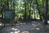 Lasek Miejski w Brodnicy zmieni wygląd. Będą leżaki, stół do tenisa stołowego i aż trzy trasy biegowe