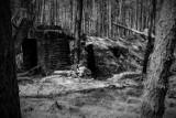 Lubuskie. Tu włos jeży się na głowie! 70 km od Świebodzina znajduje się las, który skrywa krwawą tajemnicę. Co w nim się wydarzyło?