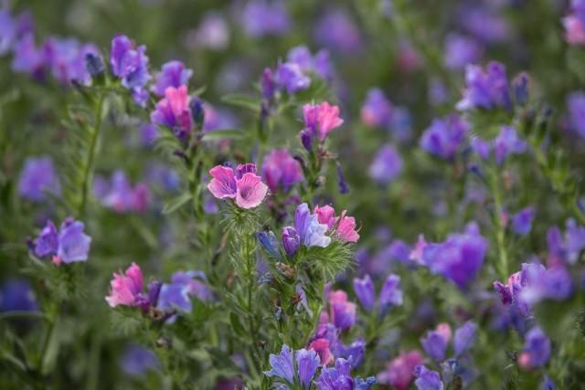 Solenizantka bardzo się ucieszy, kiedy dostanie od bliskiej osoby życzenia imieninowe razem z kwiatami. Sprawdź, jakie życzenia na imieniny będą najlepsze.