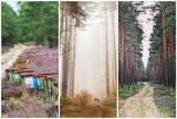 Bory Dolnośląskie zachwycają obfitością barw. Zobacz największy kompleks leśny w Europie Środkowej oczami Instagramerów