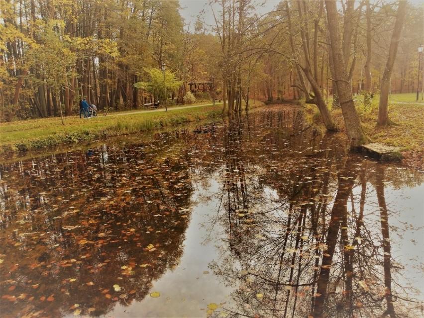 """Park w Wejherowie w obiektywie. Tak wyglądają """"zielone płuca miasta"""" latem i jesienią"""