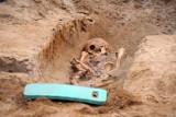 Śrem: ludzkie szczątki przy ul. Kilińskiego. Historia Śremu odkryta na placu budowy [ZDJĘCIA]