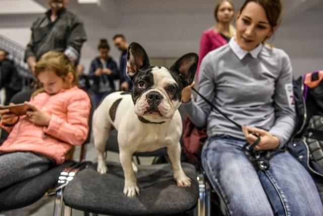 Dwa dni, 200 ras i 2000 osobników - tak zapowiada się wystawa psów rasowych