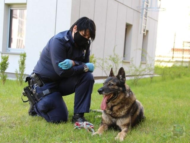 Hardo, pies policyjny z Brzegu przeszedł na zasłużony odpoczynek.