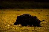 Zwierzęta w lasach na pięknych zdjęciach. Zobaczcie naturę na najlepszych fotografiach z konkursu Lasów Państwowych