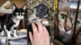 Zza miedzy. Popatrzcie, jakie piękne koty i psy szukają domów. Czekają na swoich ludzi w tymczasowym przytulisku w Jaśle