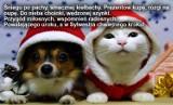 Życzenia świąteczne, wierszyki na Boże Narodzenie 2019 [SMS, TEKSTY, RYMOWANE]