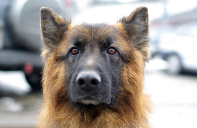 Policjanci mają swoje psy, a opieka nad innymi bezpańskimi czy niechcianymi, do szerokiego wachlarza ich obowiązków nie należy.