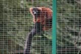 Koronawirus w poznańskim zoo. Ogród będzie zamknięty!