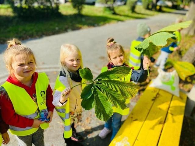 Przedszkolaki z grupy zerowej szkoły numer 5 w Jędrzejowie poszukiwały pierwszych oznak jesieni.