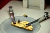 Czy pszczoły wyginą? Słodkie targi w centrum Sosnowca