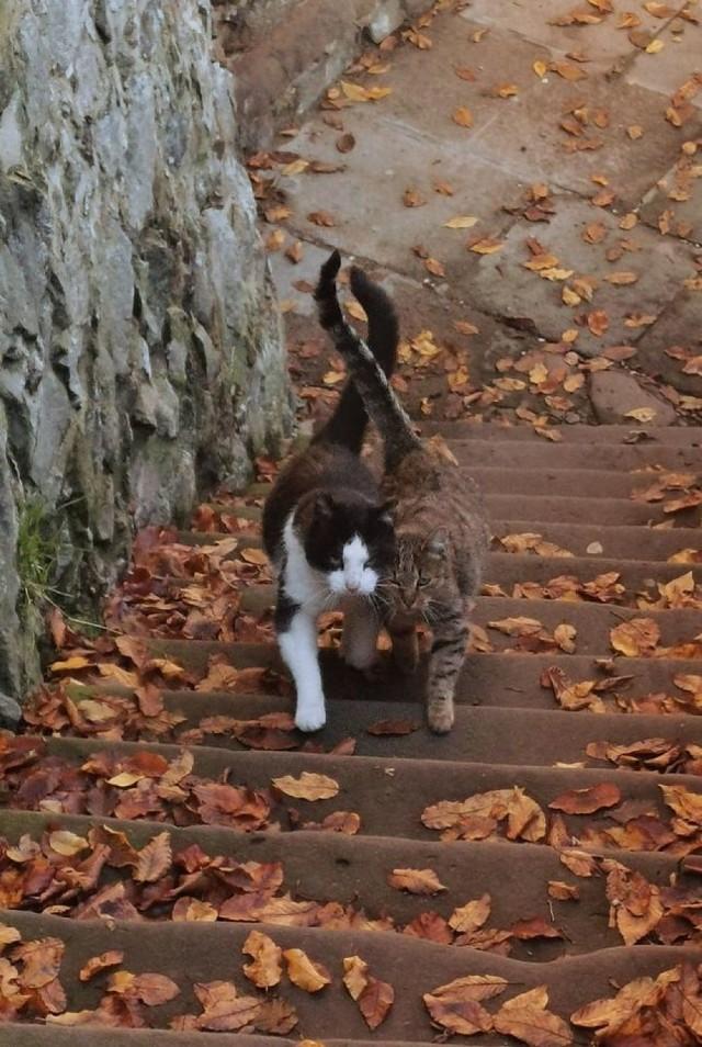 Kalendarz Koty z Zamku Książ 2021 jeszcze do kupienia. Wałbrzyszanom i mieszkańcom Świebodzic kalendarz przywiozą do domu opiekunowie kotów  Na zdjęciu Radek z Kasią. On facet z przeszłością ona kobieta po przejściach. Jak wygląda kalendarz, zobaczycie na kolejnych slajdach