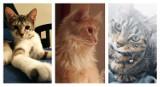 Koty mieszkańców Wągrowca i powiatu wągrowieckiego. Takie mruczki zamieszkują nasze domy. Wielka galeria kotów z Wągrowca i okolic