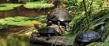 Niezwykłe miejsca, piękna dzika przyroda - Polesia czar. Zobacz Poleski Park Narodowy oczami Instagramerów