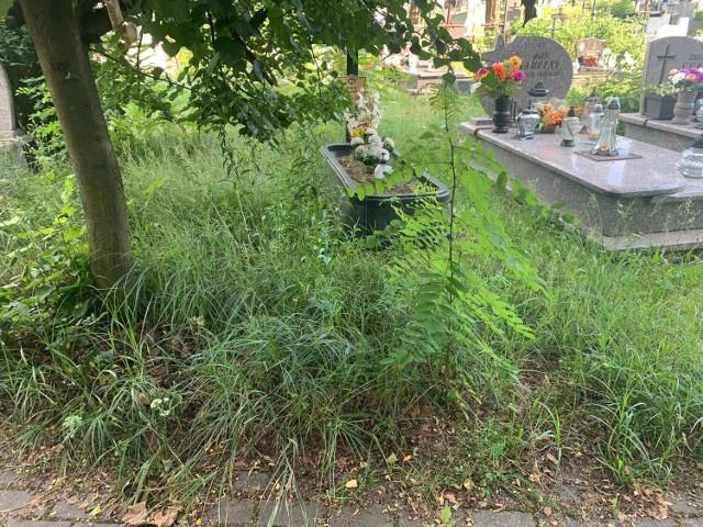 Cmentarz parafialny przy ul. Powstańców Śląskich w Olkuszu jest zarośnięty trawą, a z przepełnionych kontenerów stojących przy nekropolii wysypują się śmieci