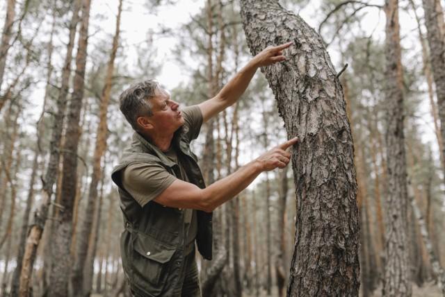 Paweł Mrowiński z Ośrodka Edukacji Przyrodniczo - Leśnej zachęca do odwiedzenia tańczącego lasu w gminie Brody.