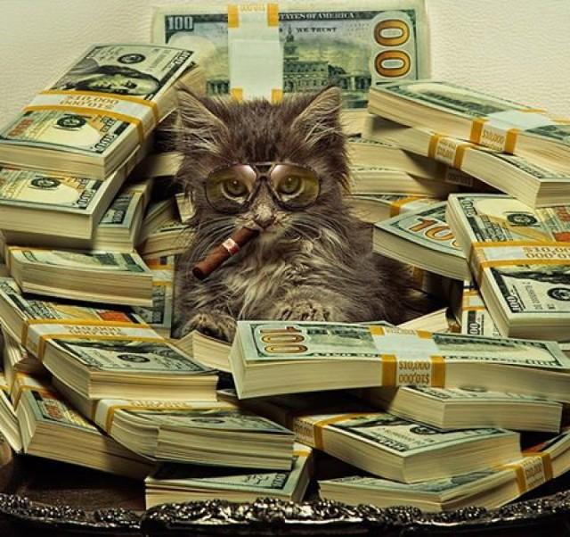 Cashcats: te koty to prawdziwe grube ryby! [GALERIA]