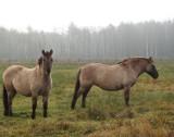 Chorują koniki polskie z leśnej hodowli. Przez niefrasobliwość turystów? [ZDJECIA]