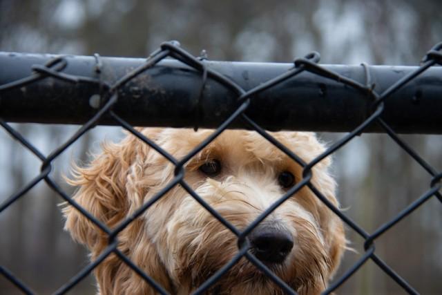 Te zwierzęta błąkały się w Bydgoszczy i okolicach, a teraz przebywają w bydgoskim azylu.