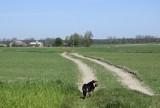Zapomniana droga ze Skierniewic prowadzi prosto do autostrady ZDJĘCIA