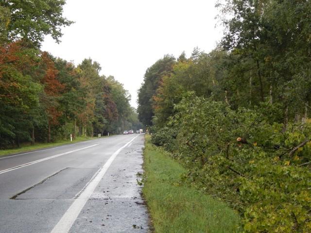 Wycinka na DK 21 między Słupskiem a Ustką. Z Zimowisk znika dąb - do niedawna pomnik przyrody, z Grabna zostanie przeniesiony krzyż. Na drodze ogromne korki