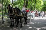 Kraków. Miasto nie zabroni dorożek, bo zarabia na nich miliony złotych