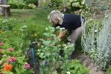 Ogromne zainteresowanie działkami ogrodowymi! Ich wartość idzie w górę! Za ile można je kupić?