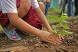 3,5 tys. darmowych sadzonek do odebrania w oleśnickim Nadleśnictwie. Akcja SadziMY już wkrótce!