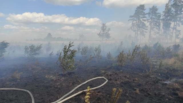 Pożar lasu koło Przybrdy