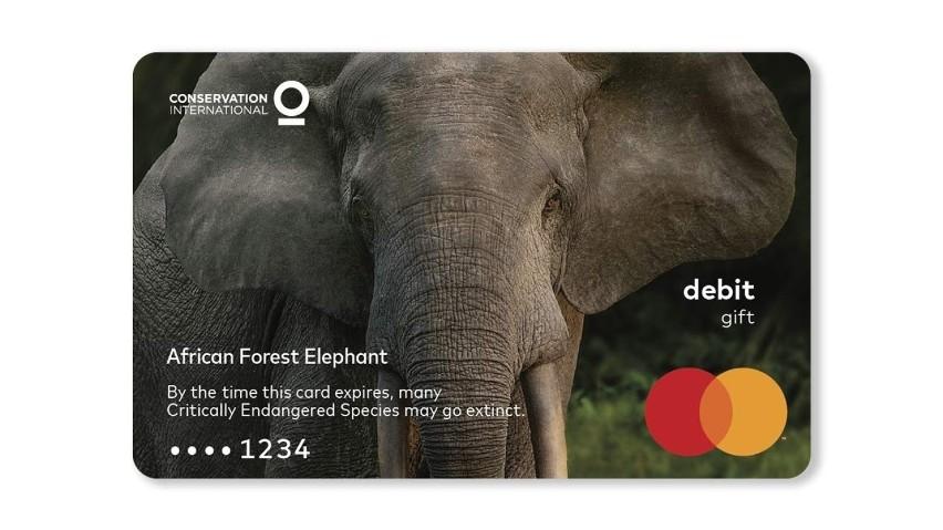 Słoń leśnyW ciągu ostatnich 31 lat populacja tych wysoce...