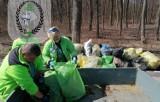 Chełmski Klub Morsów posprzątał Glinianki i las Borek. Zobacz zdjęcia