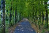 Szukamy jesieni w Parku Kuronia w Sosnowcu. To dobre miejsca na odpoczynek i spacer ZDJĘCIA