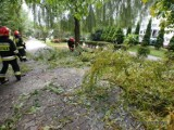 Jastrzębie: wiatr powalił drzewa. Jedno spłonęło na przewodach elektrycznych