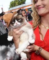 Te koty zarabiają mnóstwo pieniędzy. Zobaczcie listę najbogatszych