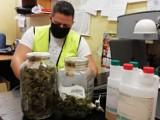 27-latek uprawiał marihuanę w domu dziadków. Krzaki rosły w zamkniętym pokoju