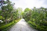 W Warszawie rośnie 9 milionów drzew. Zarabiają one co najmniej 170 milionów złotych rocznie