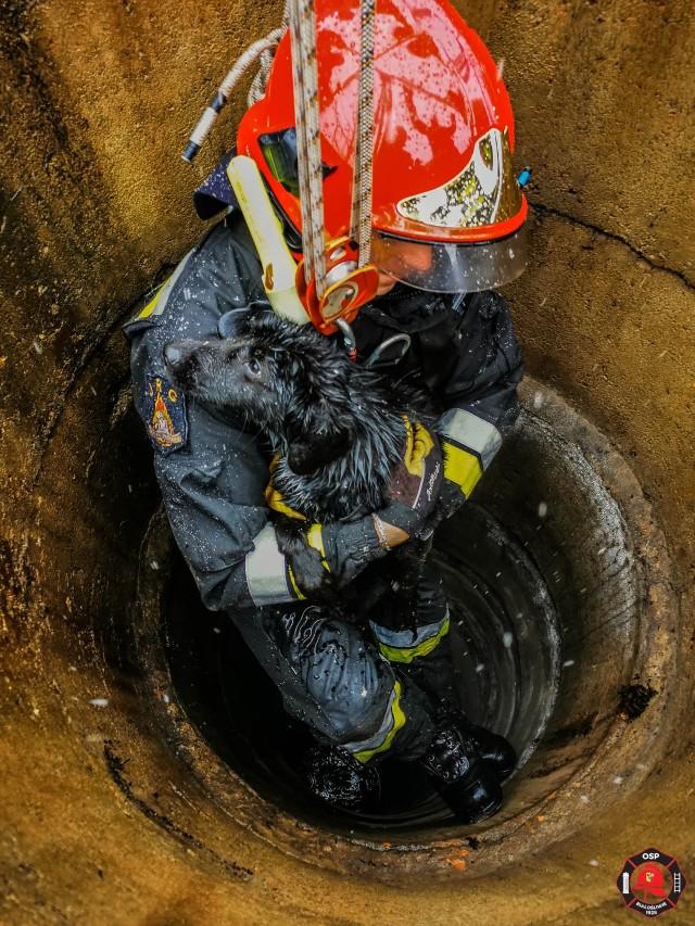 Strażacy uratowali psa, który wpadł do studni