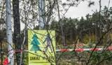 Nadleśnictwo Durowo informuje o wycince drzew w okolicy Wągrowca. Będzie obowiązywał czasowy zakaz wstępu do lasu