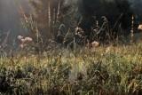 Starogard Gdański: wypalanie traw i odpadów biodegradowalnych