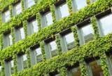 Ogrody wertykalne i zieleń na dachach budynków? Warszawa chce iść śladem Poznania i walczyć ze smogiem