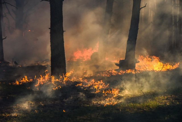Strażacy walczą z plagą pożarów lasów i traw na Mazowszu