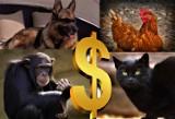 TOP 15 najbogatszych zwierząt na świecie. One odziedziczyły fortunę