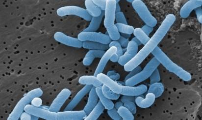 Kto w tobie mieszka? Jesteś siedliskiem życia mikroorganizmów! Które z nich są groźne?